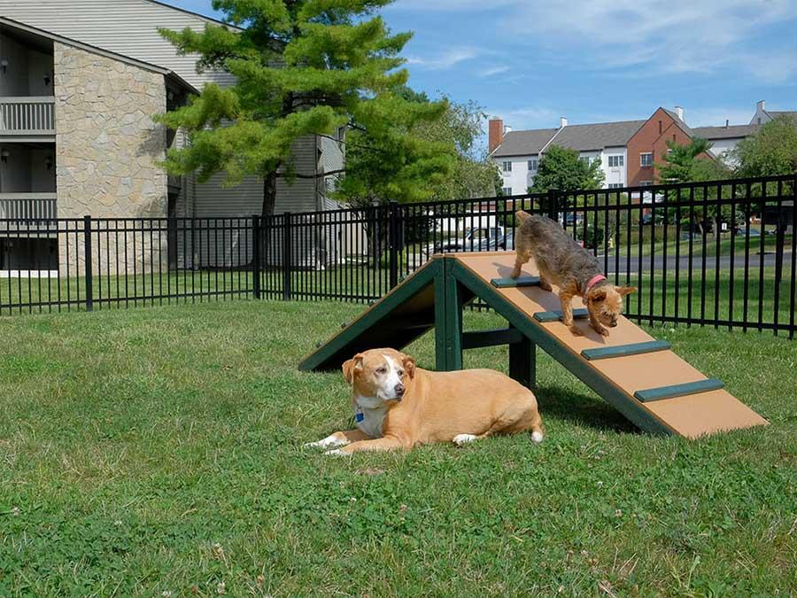 Ponderosa Village Dog Park